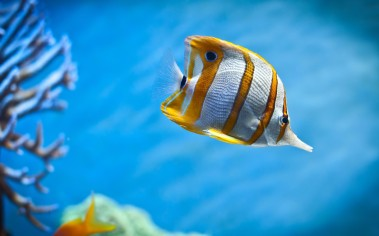 Sea-Life-Fish-Under-Water-Ocean-Wallpapers-HD